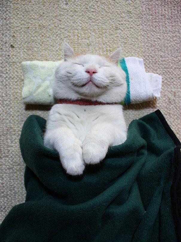 gatos-sonrientes (19)