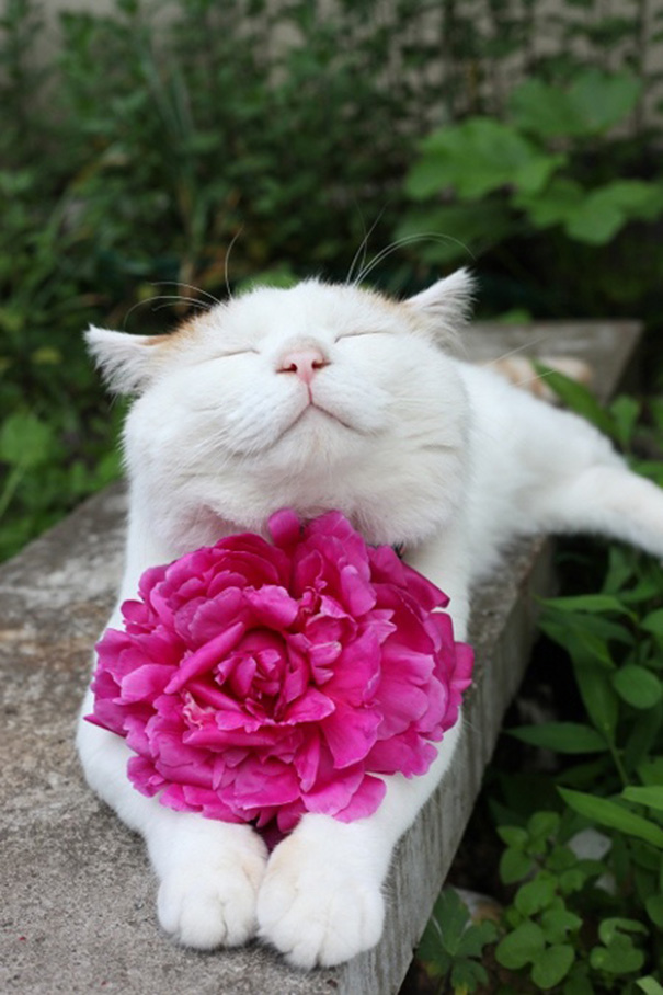 gatos-sonrientes (20)