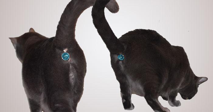 Este accesorio oculta el culo de tu gato con una joya reluciente ...
