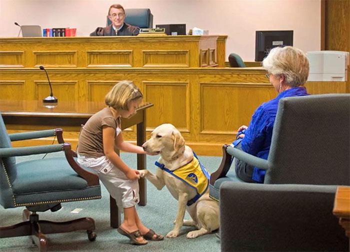 Da miedo testificar frente tu atacante en el juzgado, pero estos perros lo hacen más fácil
