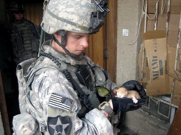 soldados-con-gatos (13)