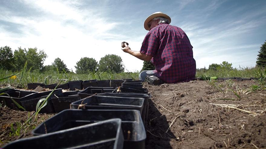 campo-plantado-pintura-van-gogh-olivos-stan-herd (6)