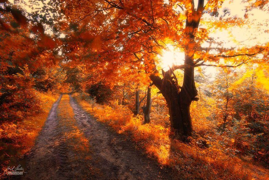 fotografia-bosques-otono-janek-sedlar (10)