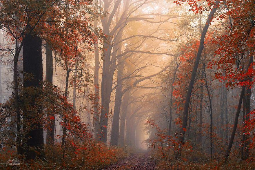 fotografia-bosques-otono-janek-sedlar (12)