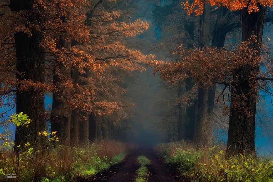 fotografia-bosques-otono-janek-sedlar (16)