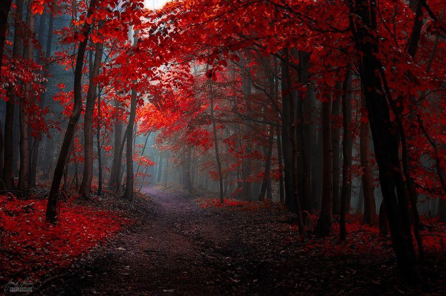fotografia-bosques-otono-janek-sedlar (19)