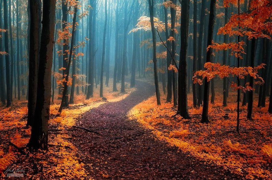fotografia-bosques-otono-janek-sedlar (3)