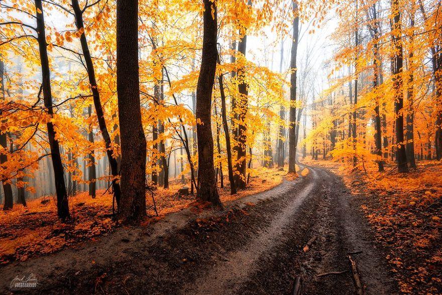 fotografia-bosques-otono-janek-sedlar (6)