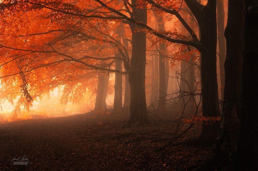 fotografia-bosques-otono-janek-sedlar (7)