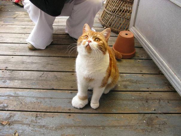 10 gatos de los que se vengaron abejas y avispas