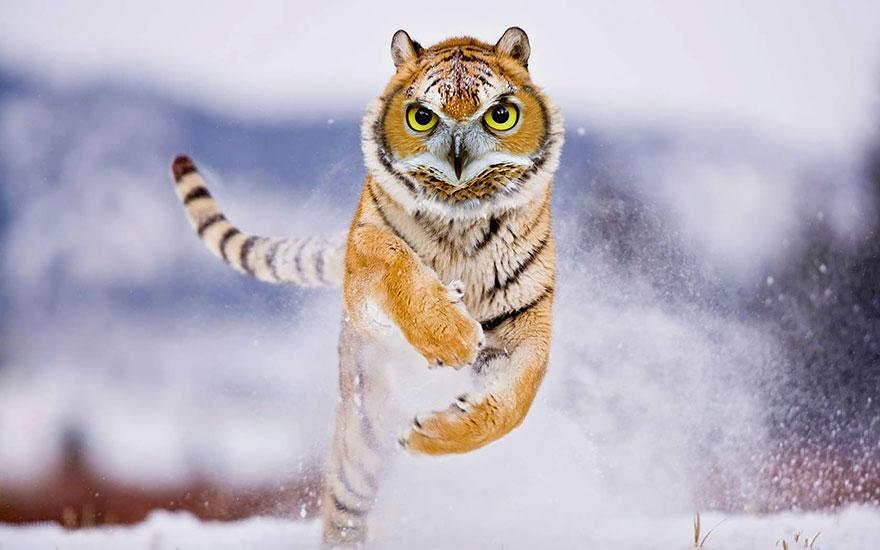 hibridos-animales (13)