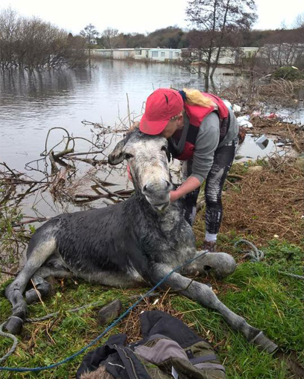 Este burro sonríe feliz tras ser rescatado de una riada en Irlanda