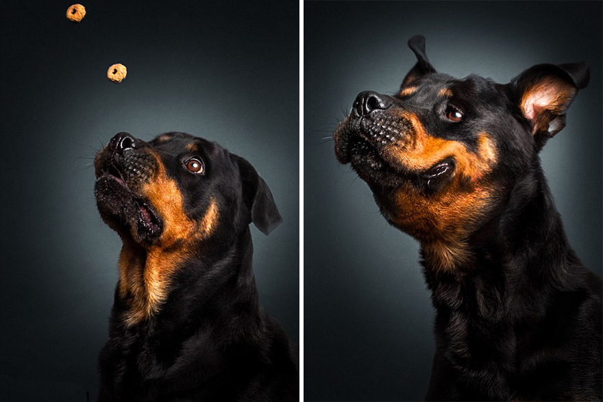 Este fotógrafo capta las divertidas expresiones de perros hambrientos al conseguir comida