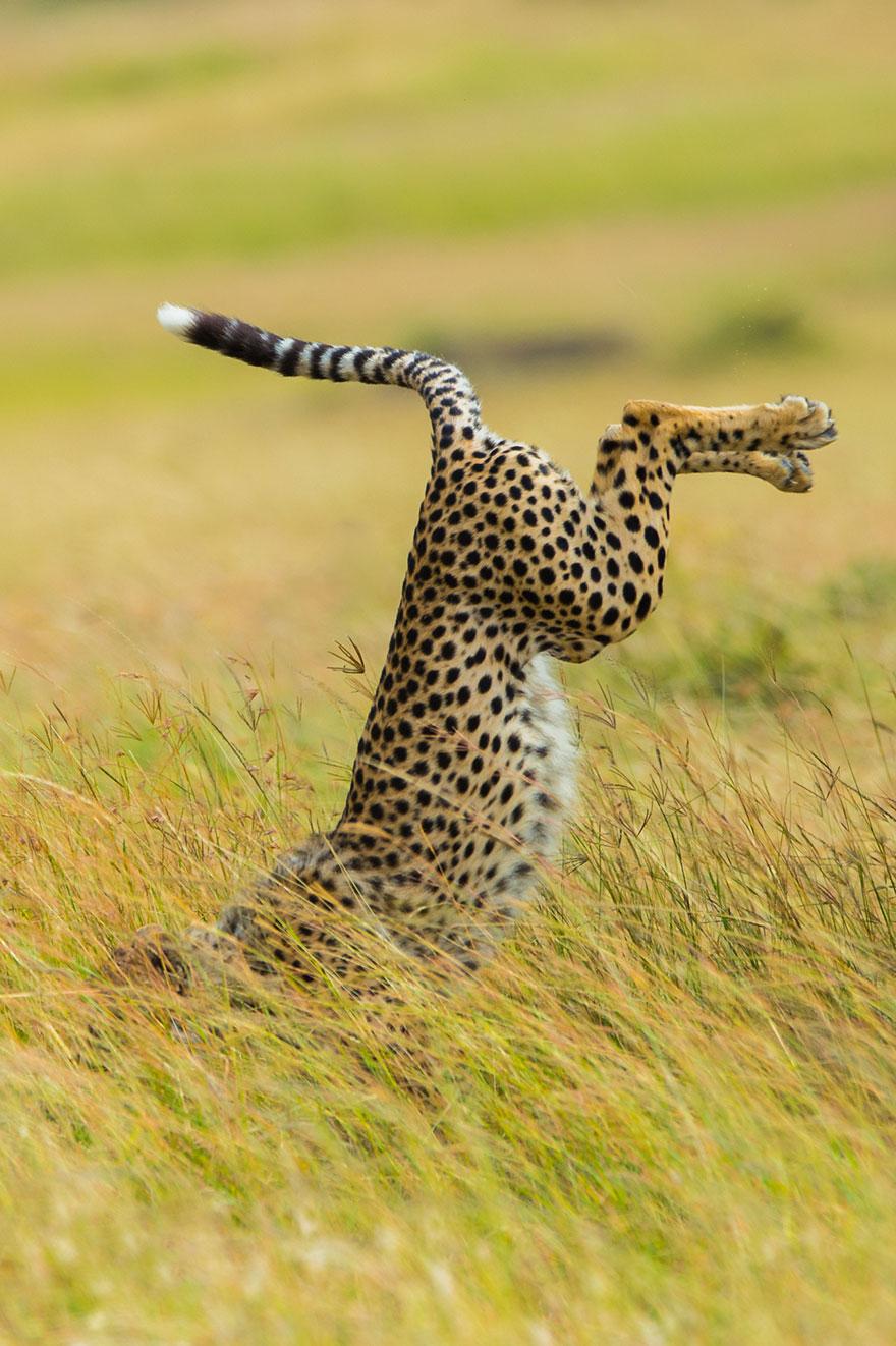 Los 13 divertidos ganadores de los premios de fotografía Comedy Wildlife de 2015
