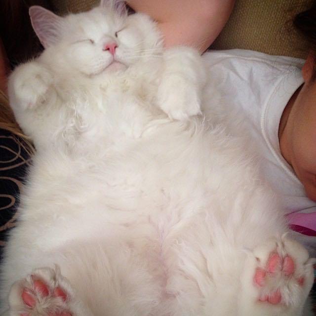 El gatito encontrado al lado de la carretera sorprende la familia Hoomin por su suavidad extrema