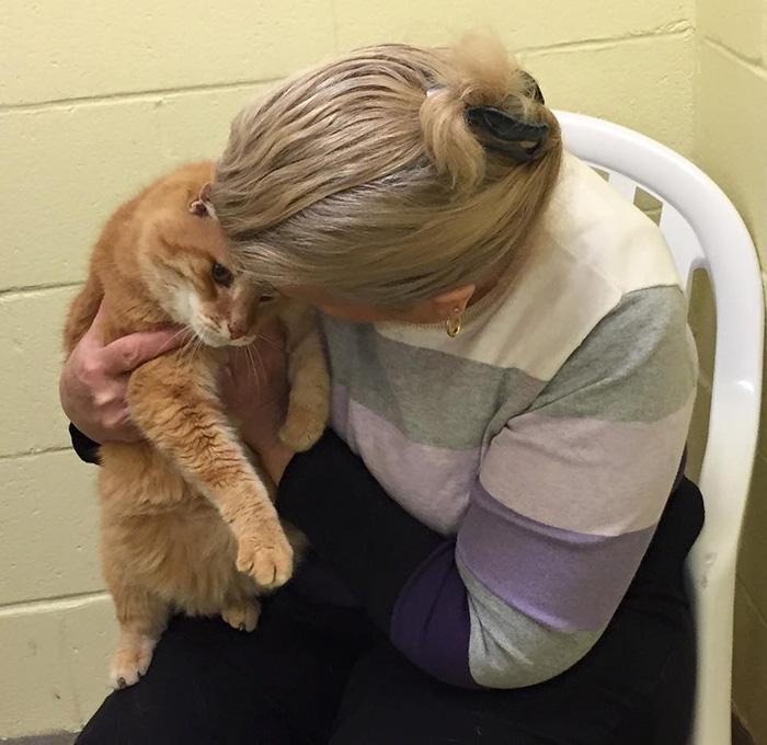 Esta mujer adoptó a un gato anciano y luego volvió al refugio a adoptar a su mejor amigo de 16 años