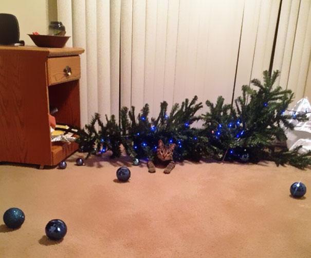 15 Gatos ayudando a decorar el árbol de Navidad