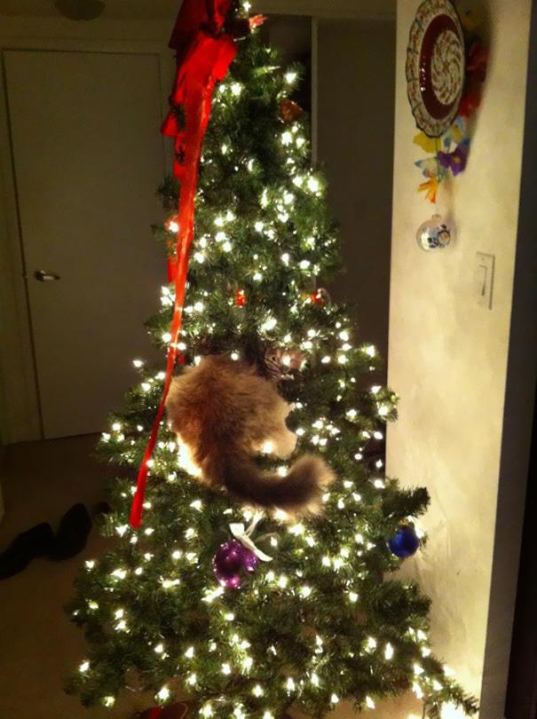 15 Gatos Ayudando A Decorar El 225 Rbol De Navidad Bored Panda