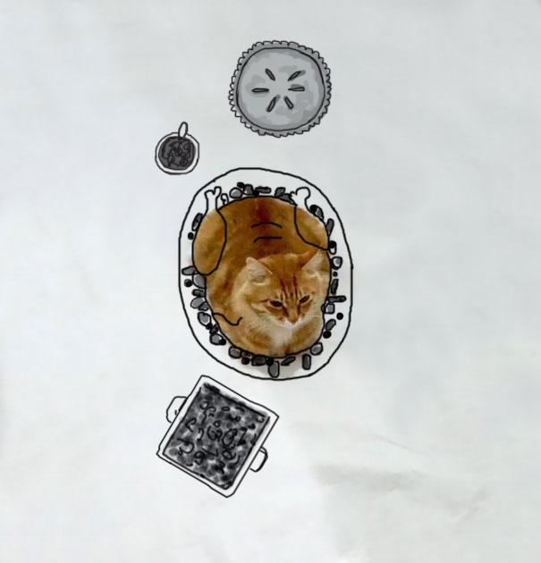 Reto: Dibuja sobre la foto de este gato para que viva nuevas aventuras