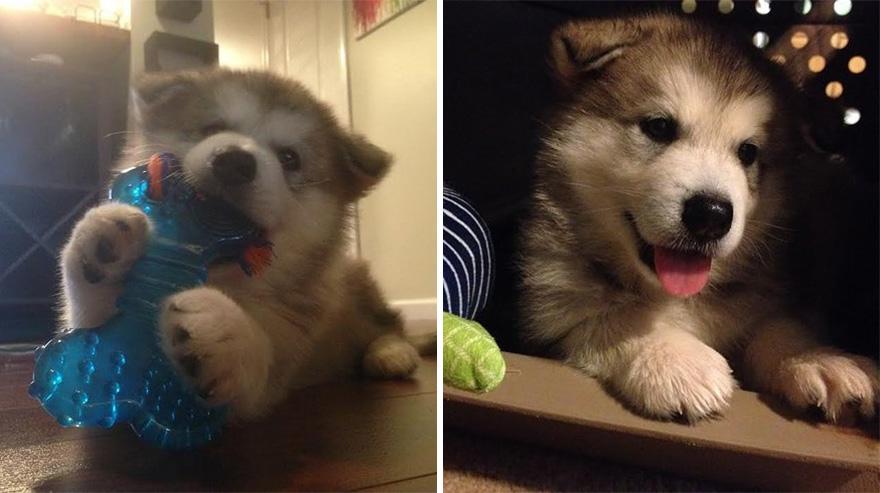 Antes y ahora: Este perro destruye todos los peluches menos este