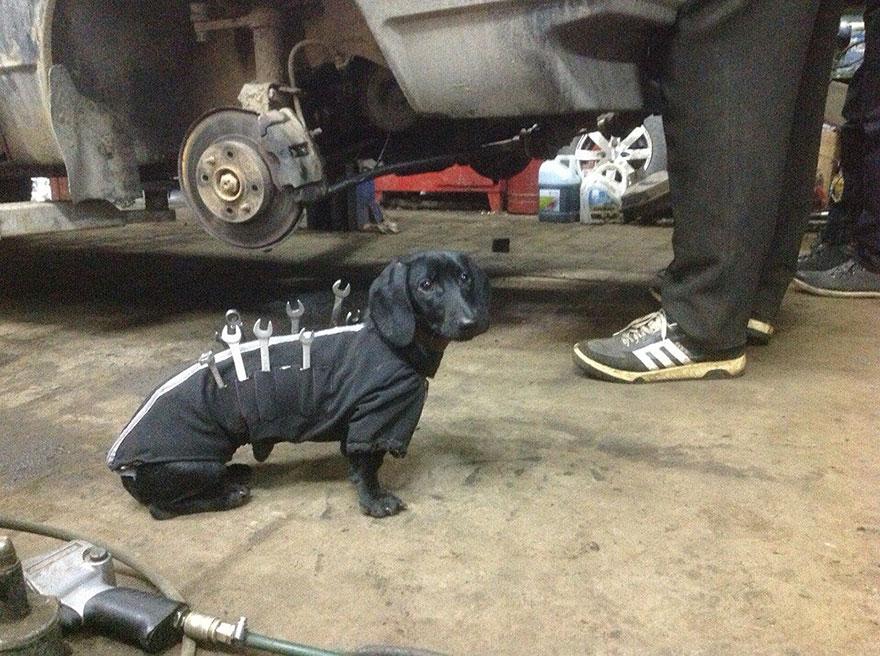 Este adorable perro con herramientas ayuda a los humanos a arreglar coches