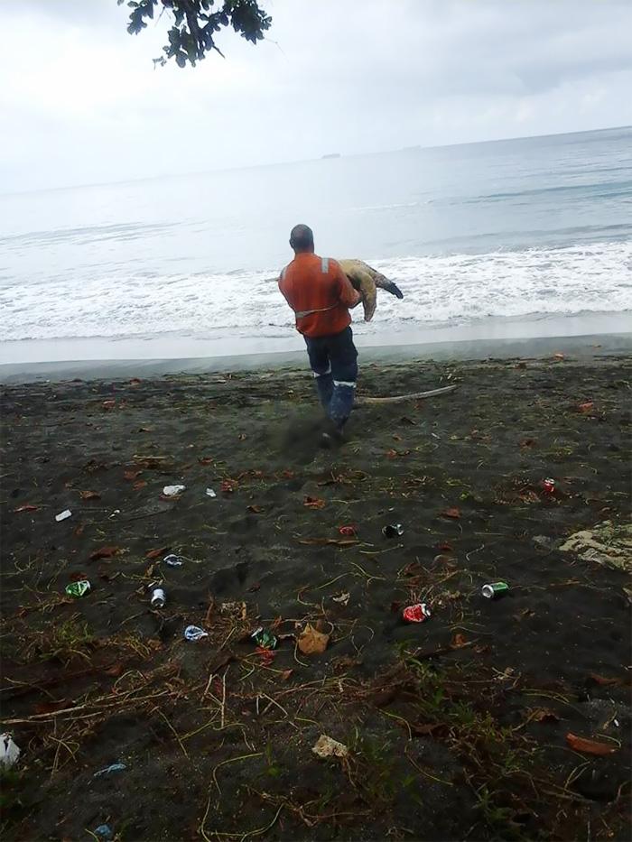 Este hombre compra tortugas en el mercado para devolverlas al mar