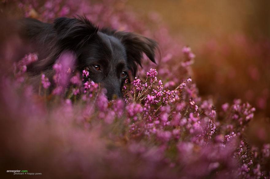 Esta fotógrafa capta conmovedores retratos del mejor amigo del hombre