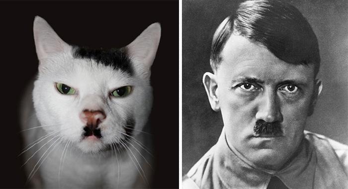 animales y sus dobles famosos