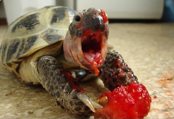 divertidos-animales-comiendo (2)