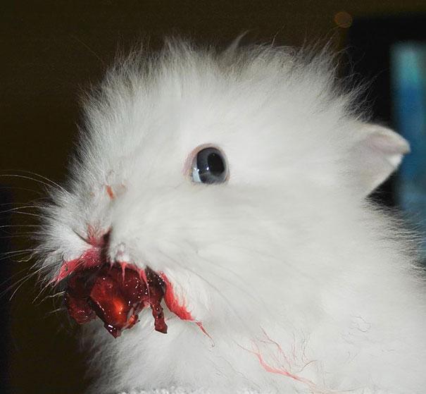 divertidos-animales-comiendo (3)