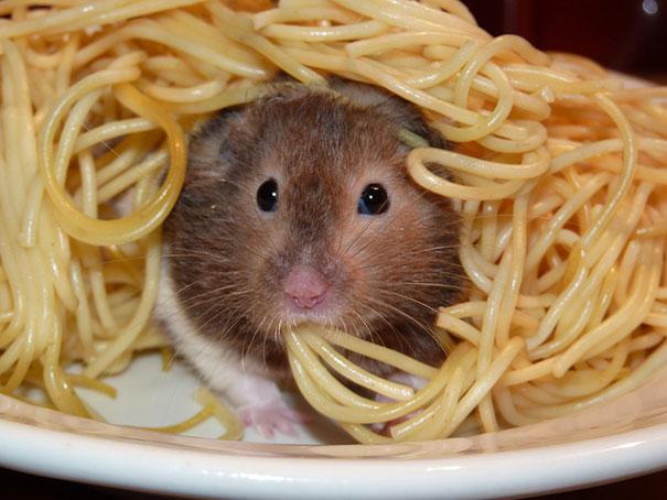 divertidos-animales-comiendo (8)