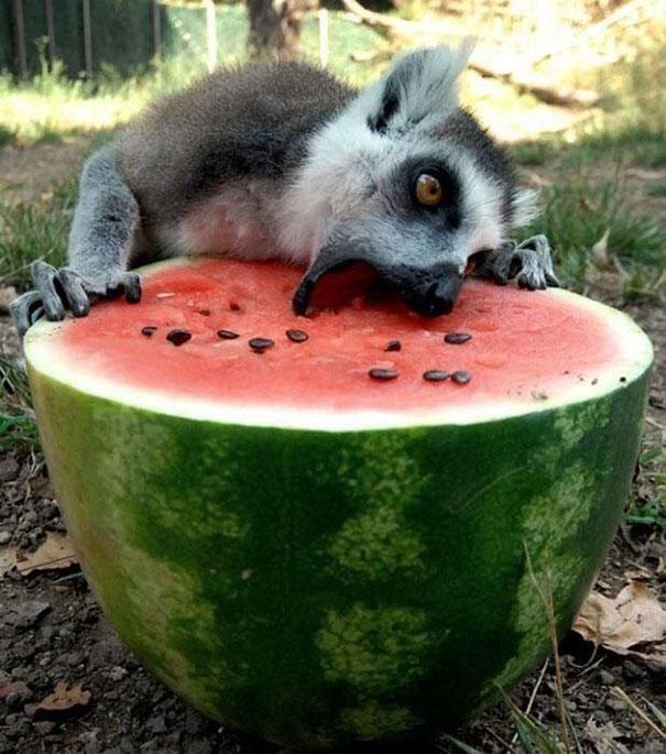 divertidos-animales-comiendo (9)