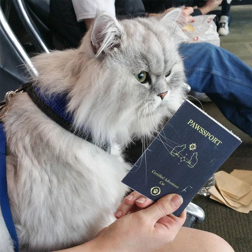 gandalf-gato-viajero (11)