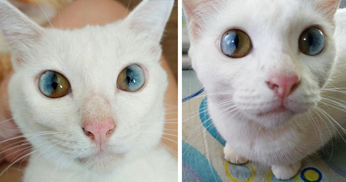 Cat Scratched Dog S Eye Bleeding