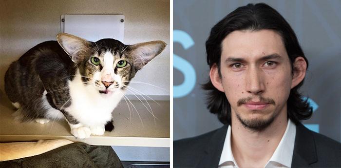 Este gato que se parece a Adam Driver de La guerra de las Galaxias ha sido finalmente adoptado