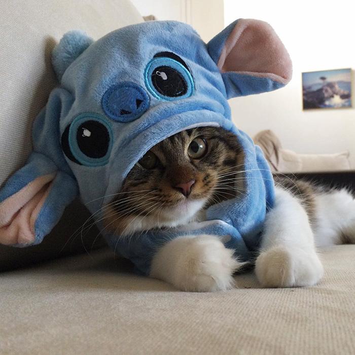 gato-rosie-amistad-3-perros-huskies (1)
