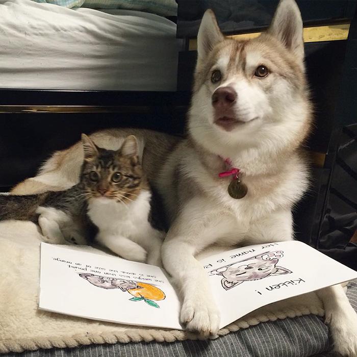 Estos 3 huskies se hicieron los mejores amigos de este gato tras salvarlo de morir