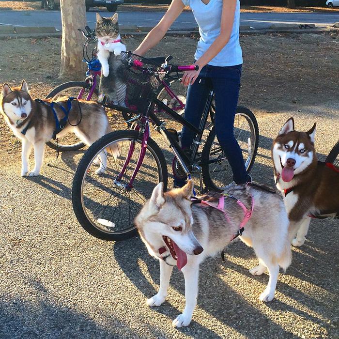 gato-rosie-amistad-3-perros-huskies (15)