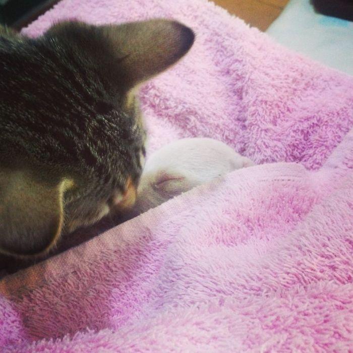 perro-nicolas-3-patas-adoptado-gatos (11)