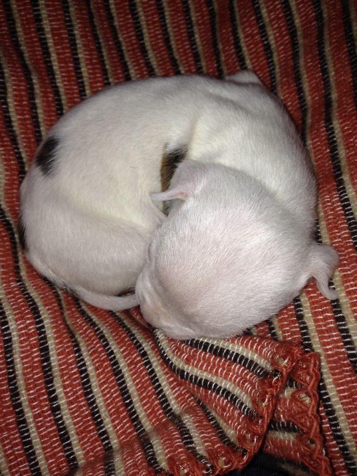 perro-nicolas-3-patas-adoptado-gatos (9)