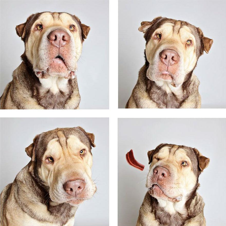 Estas Sesiones De Fotomatón Ayudan A Los Perros