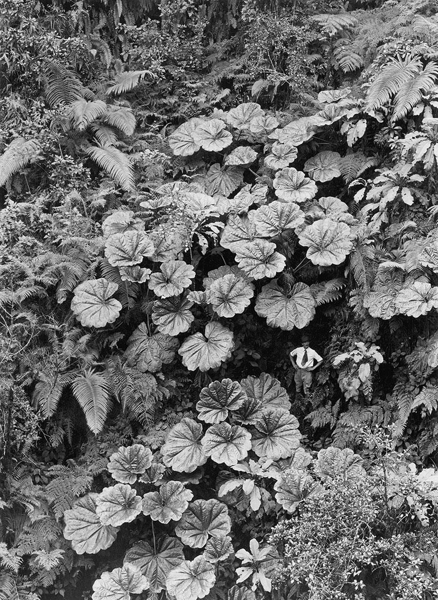 fotos-no-publicadas-national-geographic-found (25)