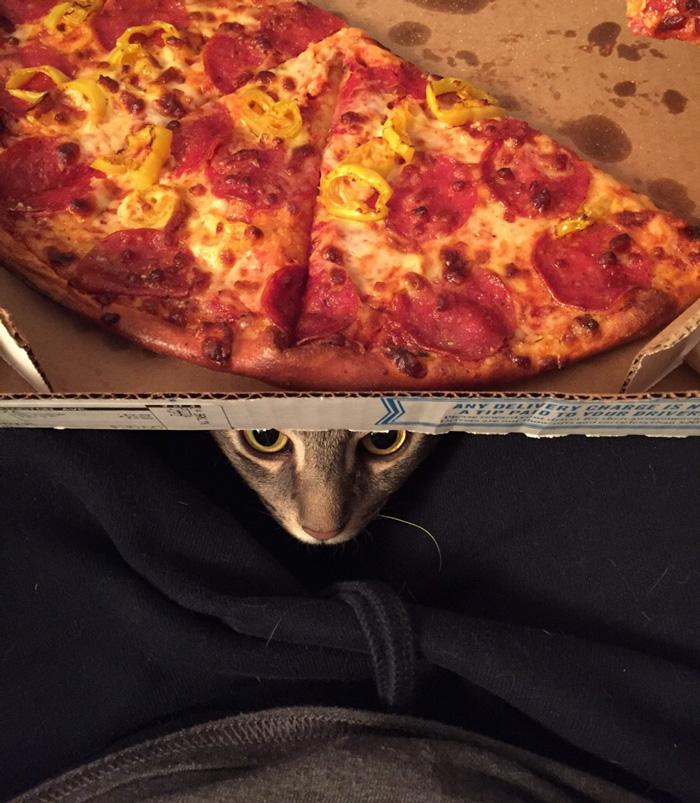 gato-callejero-adoptado-sentarse-humanos-wilbur (2)