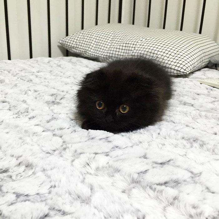 gato-negro-adorable-ojos-grandes-gimo (1)