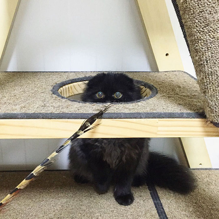 gato-negro-adorable-ojos-grandes-gimo (11)