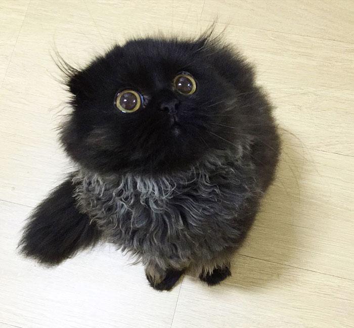 gato-negro-adorable-ojos-grandes-gimo (12)