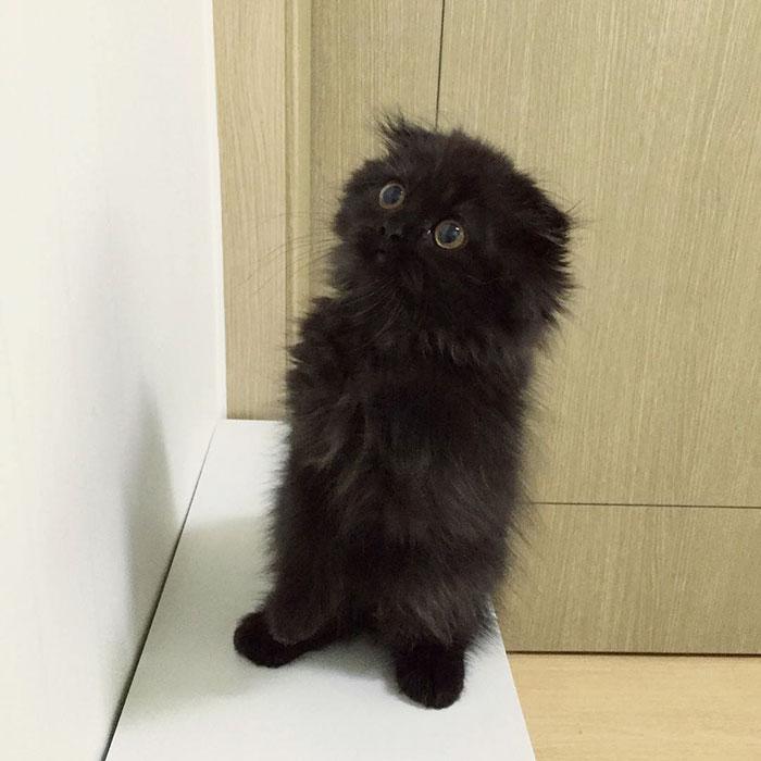 gato-negro-adorable-ojos-grandes-gimo (14)
