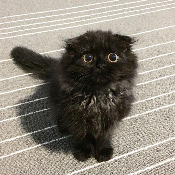 gato-negro-adorable-ojos-grandes-gimo (16)