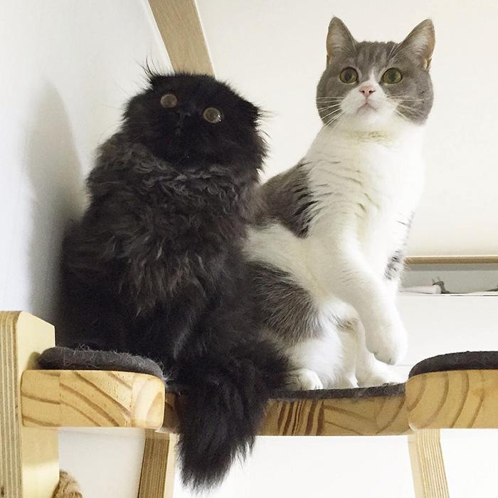 gato-negro-adorable-ojos-grandes-gimo (6)