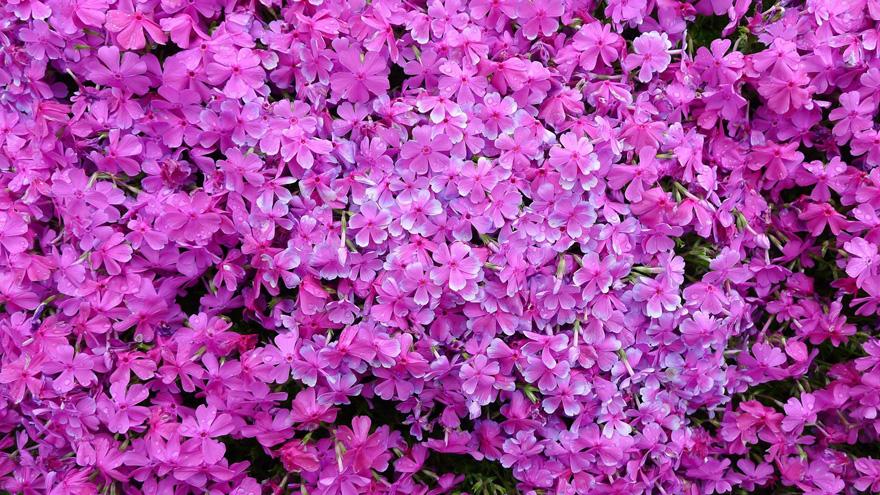 marido-planta-flores-esposa-ciega-kuroki-japon (8)
